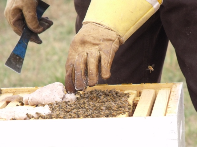 giving grease patties to one of the hives