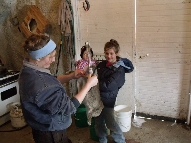 Marisa skinning one of the seven rabbits as Bella and Kallie Jo look on.
