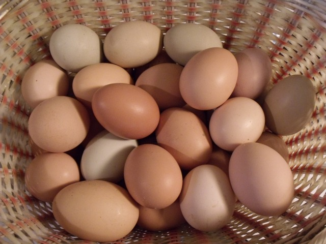 Farm fresh eggs even in the Minnesota winter.