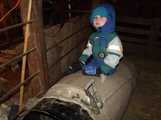 Cael on his 4th birthday observes his father as he works, while sitting on a wool bag.