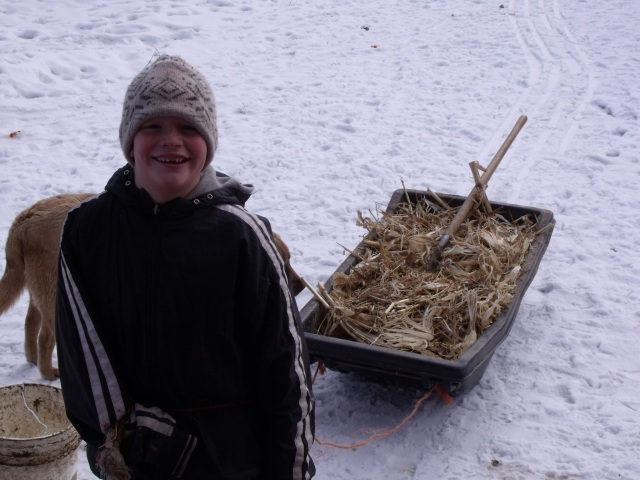 Mario hauls some corn stalks for the chicken house we were pitching out.