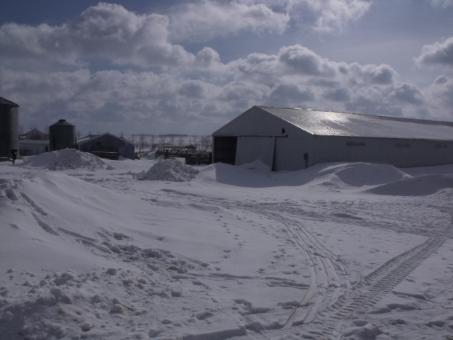 Our farm yesterday, March, 2013