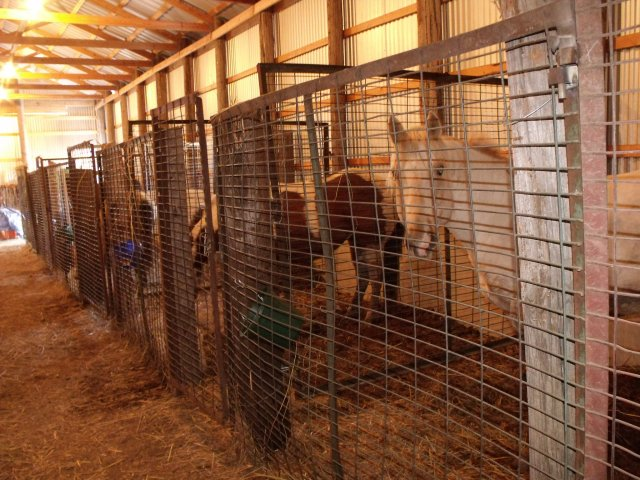 Horse stalls at Clayton's  place.