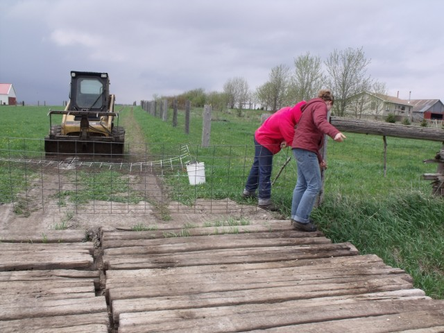 The girls getting the fence ready for the next paddock.