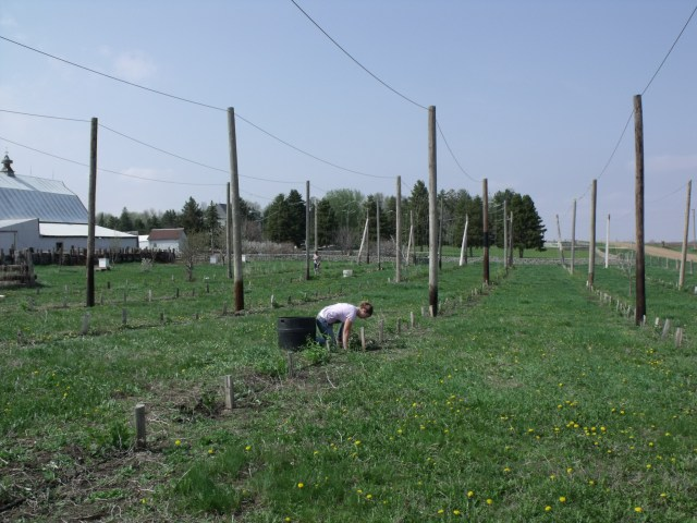 View of our front hops yard.