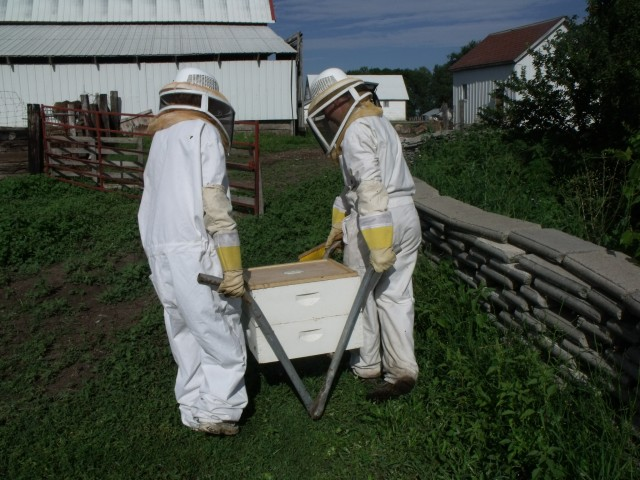 Hauling honey supers to the  honey shed.  These are very heavy and Fred made the home crafted carrier.