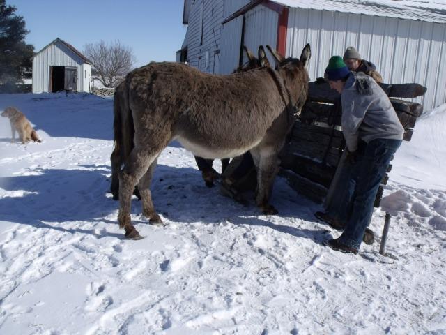 donkey trim 032
