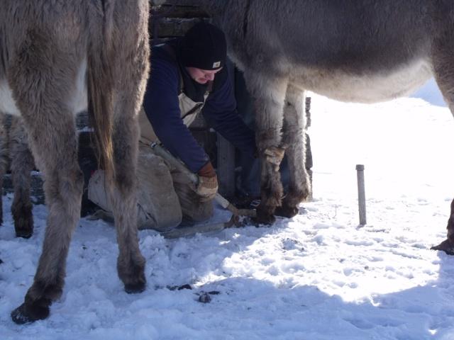 donkey trim 036