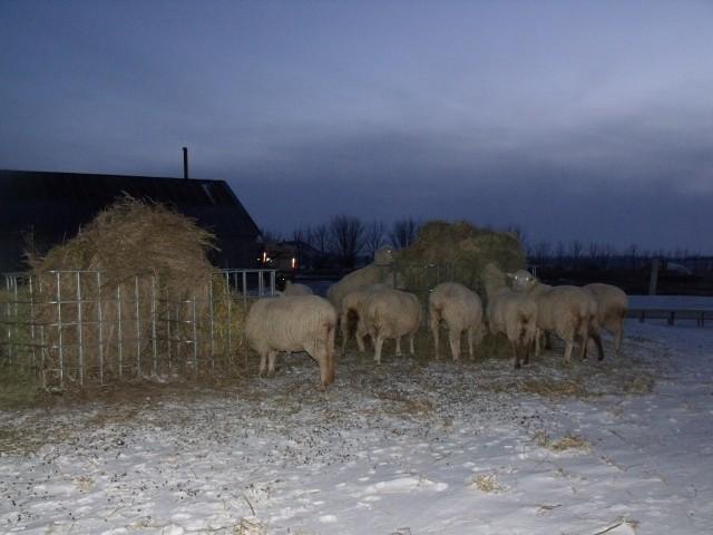 donkey trim 061