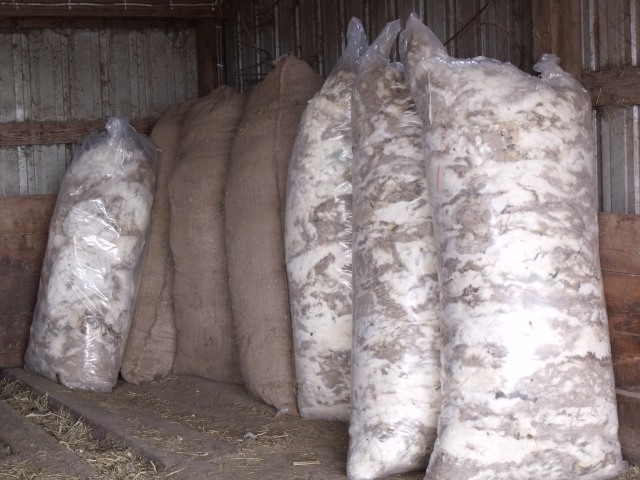 Bagged wool,  ready for sale.
