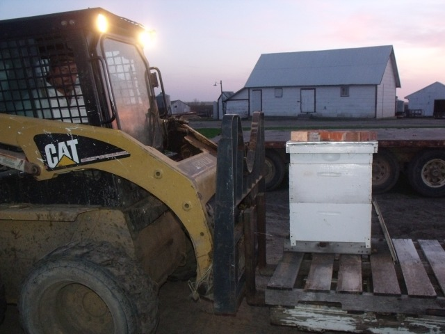 Fred Moving Hives The End Of The Day!