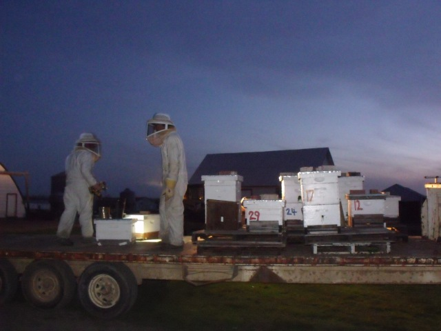 A couple more hives to load and we ask God to bless the bees and away we go.