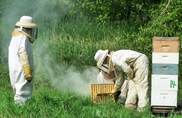 Brushing off the bees gently before we load the super.