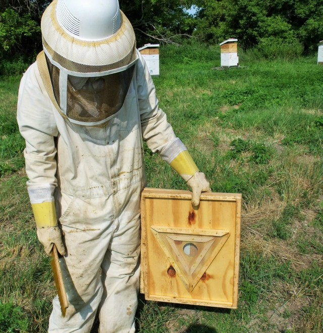 This is a bee escape board which is placed right below the supers we plan on removing 24 hours before we harvest.  This allows the bees to travel down but not come back up into the honey super.  Most of the bees are out making it much easier.