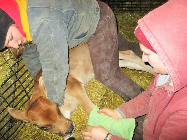 Silvana and Marisa giving some gentle therapy to the calf.