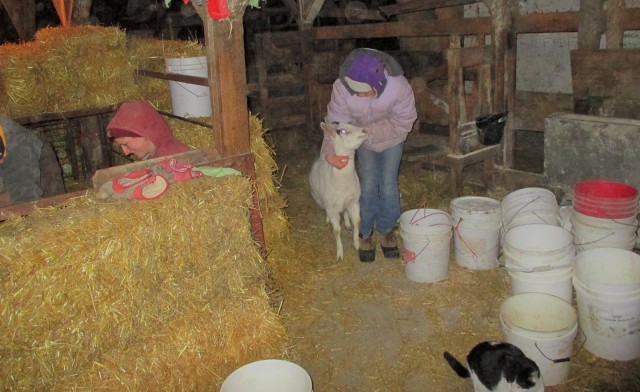 Bella loves her goats and is very gentle with animals.
