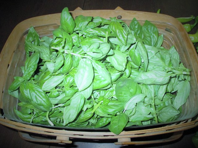 Sweet Italian Basil! We have harvested this 5 times so far. This is a must in my kitchen.