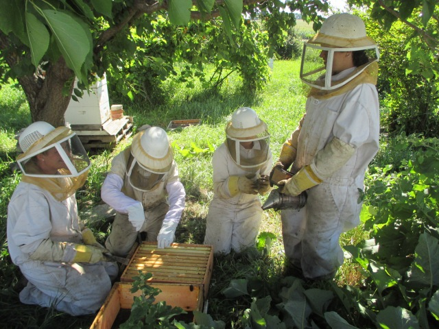 Marisa, Silvana, Maggie and my niece Chiara gathering the honey.