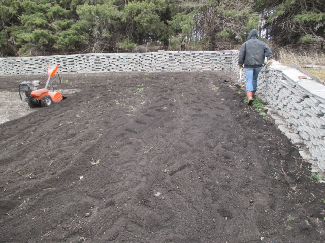 The tilled land ready for the potato seeds.
