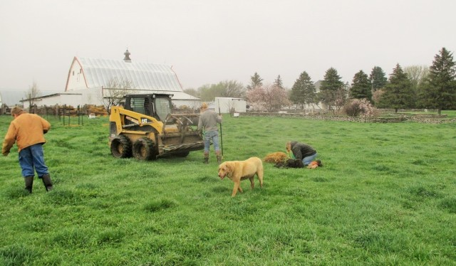 Planting the peach trees earlier this spring.