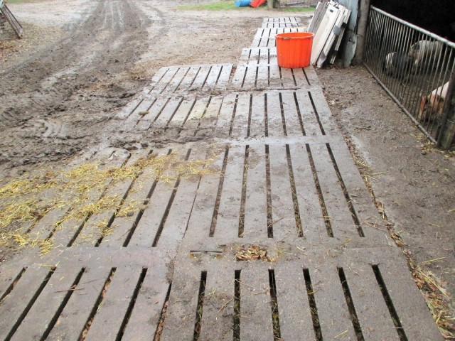 Old Hog slats make for instant mud relief! Fred put these in all over the farm to keep the hogs out of the mud and make driving and walking easier.