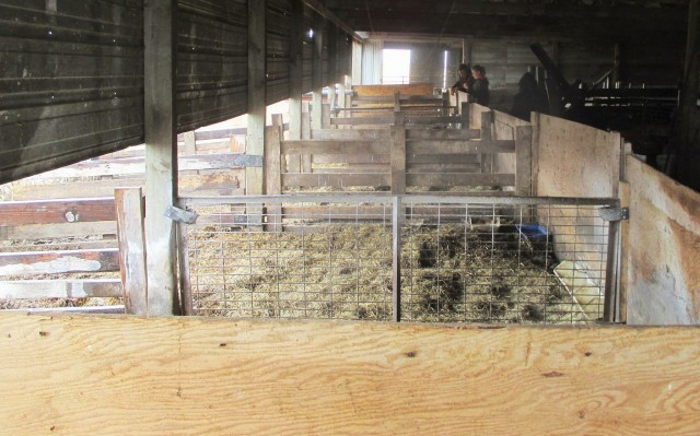 Empty farrowing house just before we dismantled the pens for the winter.