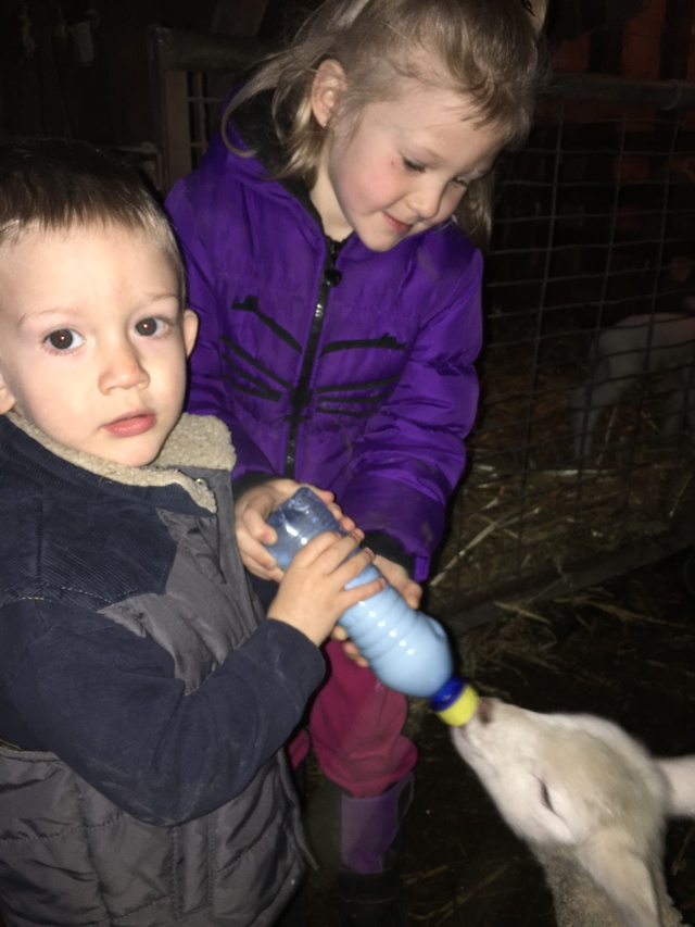 Rafe and Josie helping feed lambs.